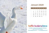 Bureaukalender Vogels 2020